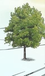 A tree you like