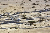 Crude oil streams in desert in south Israel, near the village of Beer Ora, north of Eilat