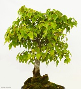 tree_160
