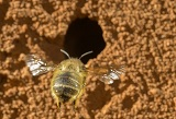bees_160